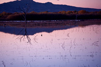 Bosque del Apache in November